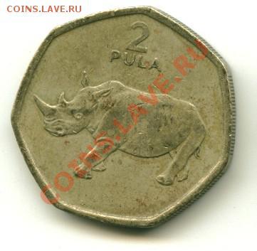 2 пула Ботсвана носорог до 01.10.2013 22-00мск - бот1