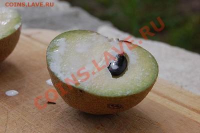 делает - прямо сейчас !!! - 800px-Sapodilla_fruit