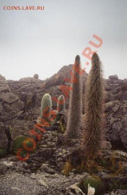 Монеты с ГОРАМИ (любых стран) - Mount_Kenya 1