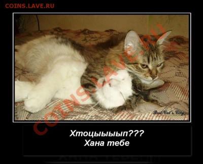 делает - прямо сейчас !!! - 326247_kote-killer