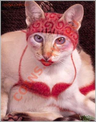 Любите ли вы кошек? - post-3-12353734076129