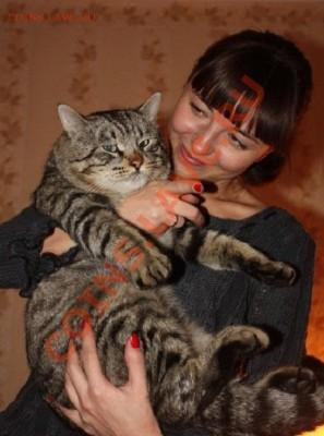 Любите ли вы кошек? - 456743