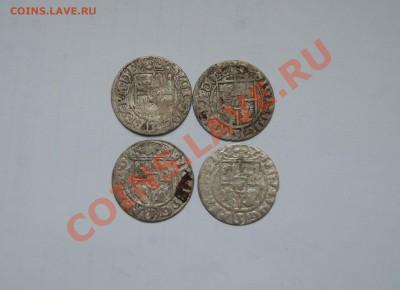 Серебряные полтораки Сигизмунда 3. Погодовка. 07.12.13 в 22 - DSC_6464.JPG