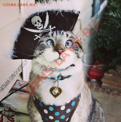 делает - прямо сейчас !!! - cats