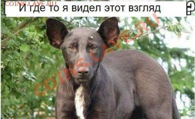 юмор - пес