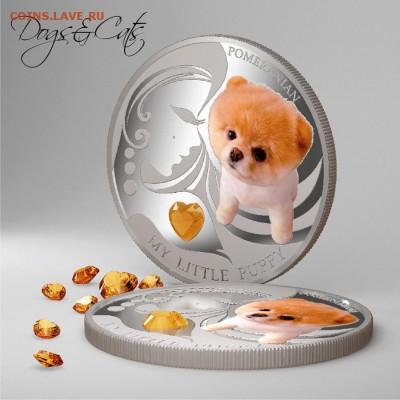 Чеканил ли кто монету с Чихуахуа (порода собаки)? - DOG_my_little_puppy2[1]