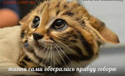 юмор - u1j_AzMMsdQ