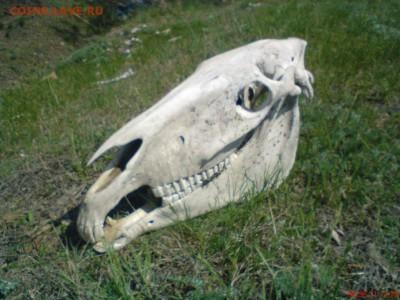 Покопушки от Русланыча . - 1261004