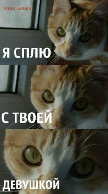 делает - прямо сейчас !!! - кот с авы саныча