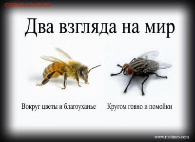 Новосибирск - третий город РФ - 197603_239880859471526_1524463569_n