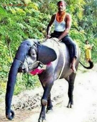 юмор - Слон