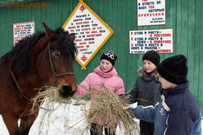 Нужны значки ФАУНА для выставки юннатам - Кормление лошади