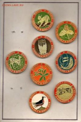 Нужны значки ФАУНА для выставки юннатам - img788