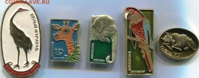 Нужны значки ФАУНА для выставки юннатам - img194