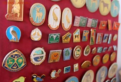 Нужны значки ФАУНА для выставки юннатам - Экспозиция - фото 2