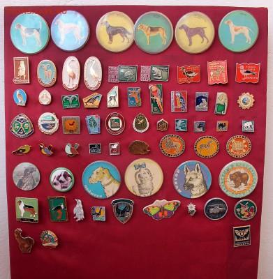 Нужны значки ФАУНА для выставки юннатам - Экспозиция - фото 1