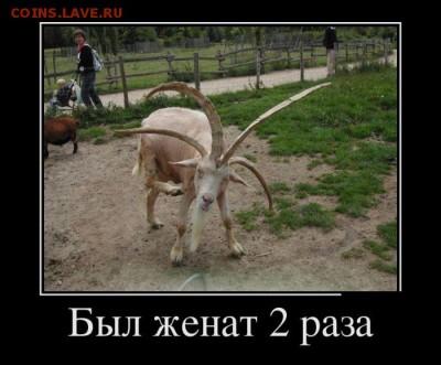 веселые картинки - 1467143457_11