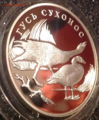 Гусь сухонос 1 рубль 2006 год до 1.11 в 22.00 Старт с 500 - IMG_7295.JPG