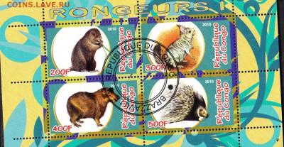 Конго 2010 фауна (3) - 3