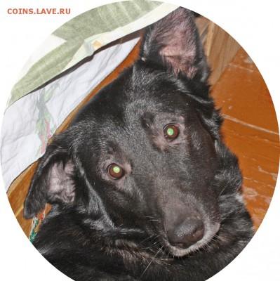 Любите ли вы собак - 901