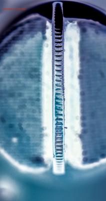Бракованные монеты - DSC_0047.JPG