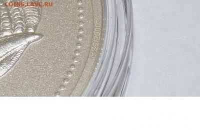 Лунар ЧЕРЕП (Год козы), до 26.02.2017 г. в 22:00 МСК - фрагмент