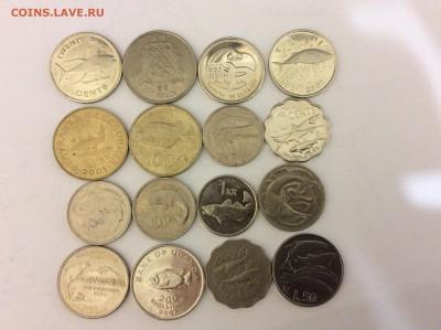 Животные на монетах - IMG_1865.JPG