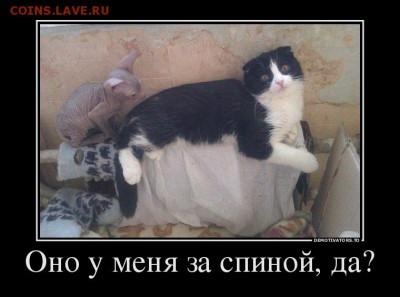 Не могу загрузить фото на аукцион подскажите как быть - 67715317_ono-u-menya-za-spinoj-da