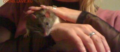 Ваши кошмары - мышь1