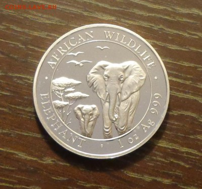 СОМАЛИ - ДВА СЛОНА 2015 унцовка до 22.09, 22.00 - Сомали 2 слона.JPG