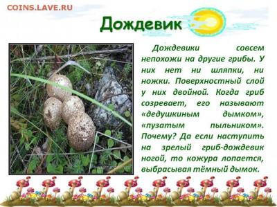Опытные грибники! Отзовитесь! - 0015-015-Dozhdeviki-sovsem-nepokhozhi-na-drugie-griby
