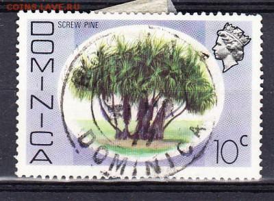 Доминикана 1м дерево - 113