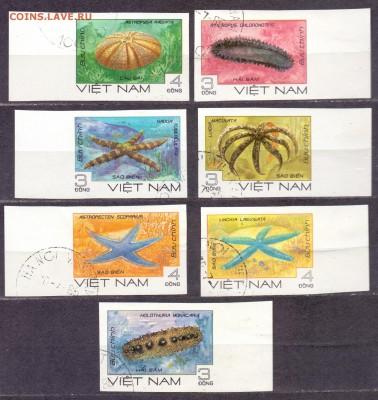 Вьетнам, морская фауна, гашеные, до 06.03.18 22:00 МСК - вьетнам звезды