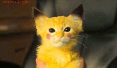 делает - прямо сейчас !!! - cute-cat-or-pikachu