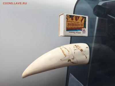 Куплю зубы кашалота ,клыки моржа ,а так же изделия из них - IMG_4145.JPG