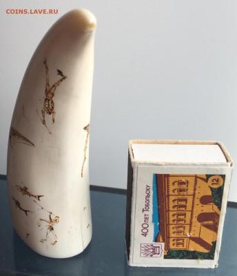 Куплю зубы кашалота ,клыки моржа ,а так же изделия из них - IMG_4147.JPG