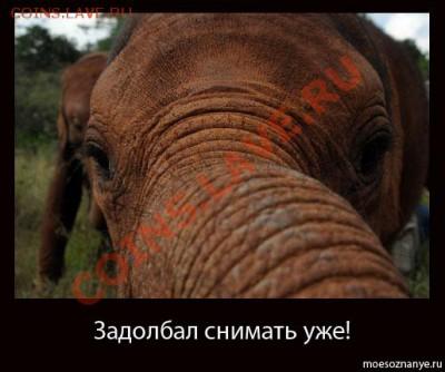 Закажи фотографию!!! - Slon