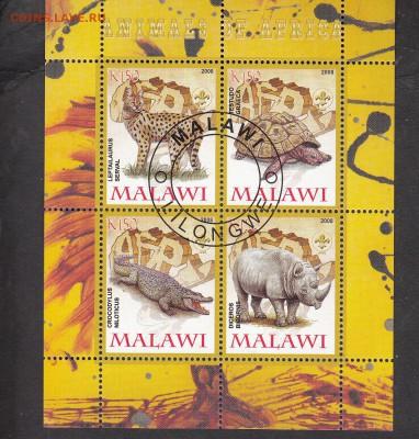 Малави 2008 фауна Африки - 18