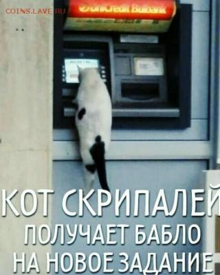 юмор - кот