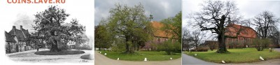 Нотгельды. - Дуб в 1895 году и этот же дуб в настоящее время (фото Sipalius)