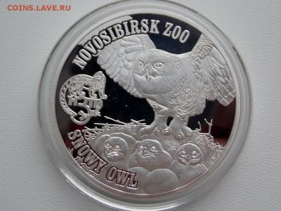 Вергинские острова 1 доллар Сова - DSCN7271 (1280x960)