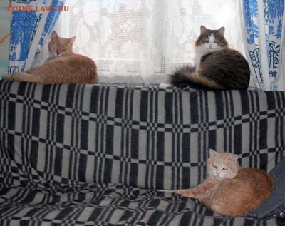 Респект Макдоналдс! А лучше вообще его открыть по всей РФ! - Наши коты