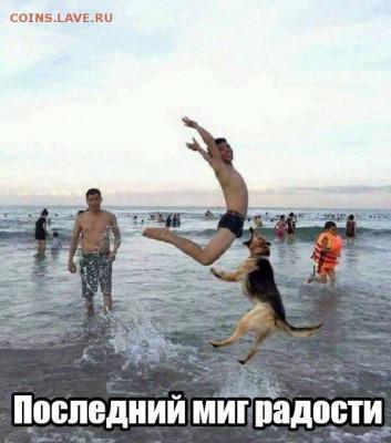 юмор - 2z-z_K_Ck0Q