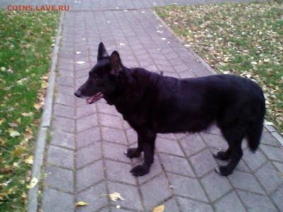 Любите ли вы собак - 2019-10-06 Флешка