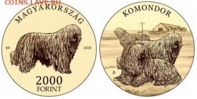 Монеты с изображением собак. - Венгрия 2020 10