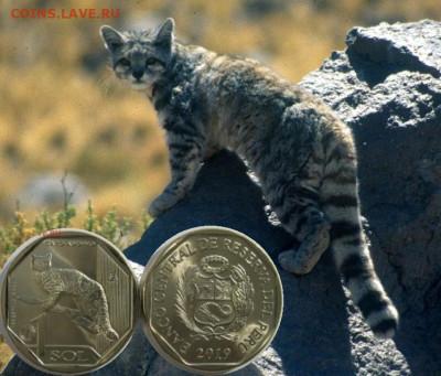 Кошки на монетах - Andean_cat_