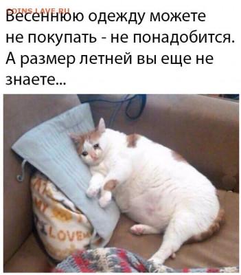 юмор - fZON2NshZbU