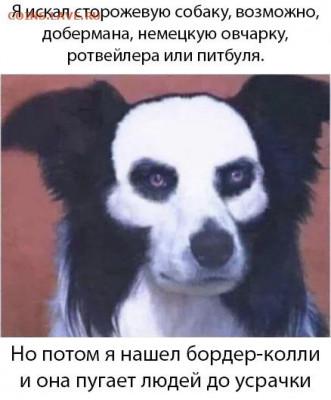 юмор - kvTAvZ-dLQI
