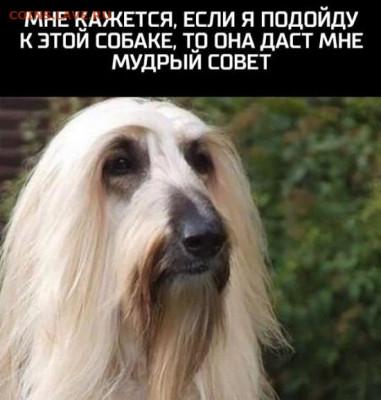 """Игра """"Железная Логика"""" - 1610517732_7"""