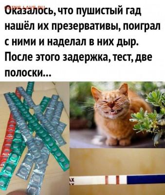 юмор - dAxA19fQWJc